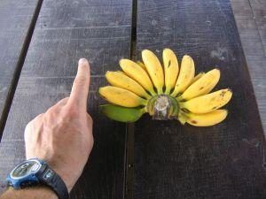 Petites bananes, vite avalées